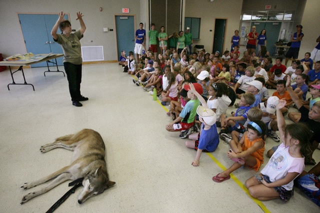 Shy Wolf Sanctuary board member Nancy Smith answers curious campers' questions about wolves while gray wolf Ahanu snoozes during a special demonstration for Camp Collier attendees at Vineyards Community Park on Wednesday.  Shy Wolf volunteers came with Ahanu to teach campers about the history of the gray wolf and proper care for domestic pets. Courtney Potter/Staff.