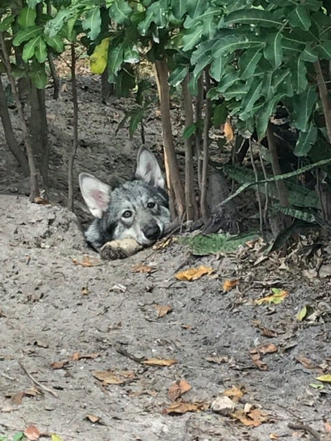Residents - Shy Wolf Sanctuary